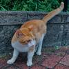 吾輩は猫である、ニャー # 1134