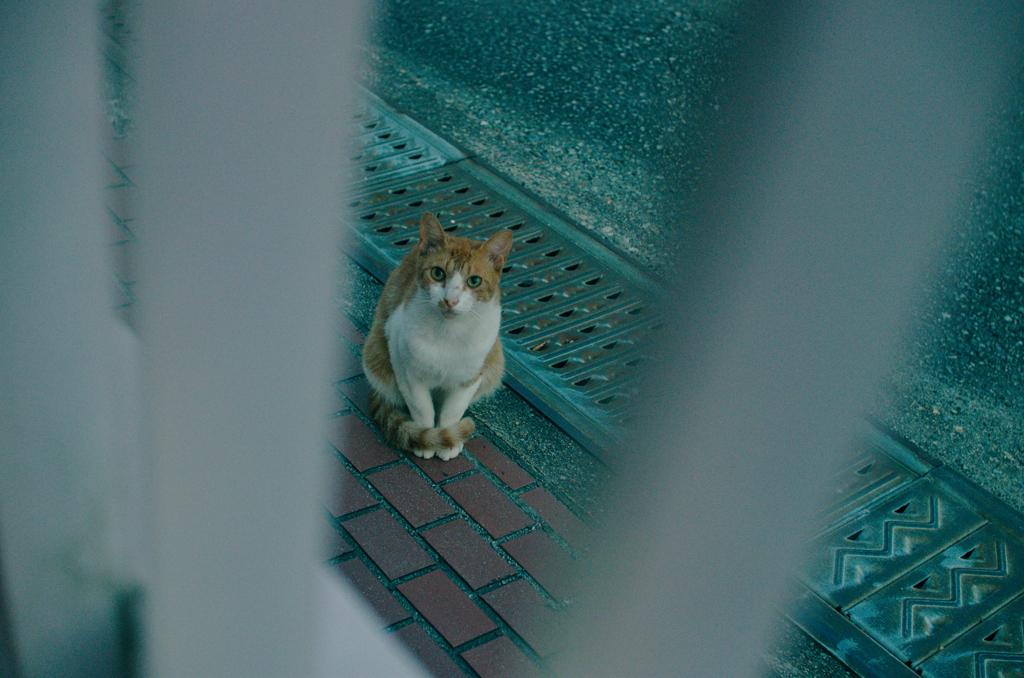 吾輩は猫である、ニャー # 1194