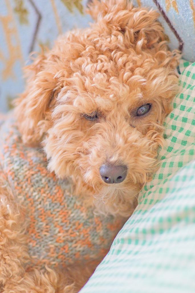 my pretty dog Ⅱ # 220