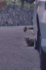 吾輩は猫である、ニャー # 1097