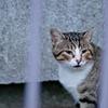 吾輩は猫である、ニャー # 779