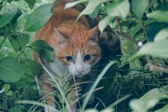 吾輩は猫である、ニャー # 1086