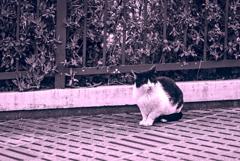 吾輩は猫である、ニャー # 927