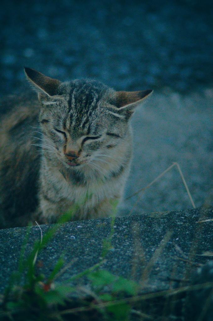 吾輩は猫である、ニャー # 1178