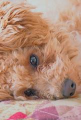 my pretty dog Ⅱ # 240