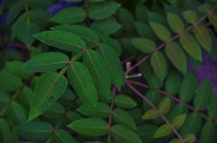 leaf #30