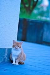 吾輩は猫である、ニャー # 652