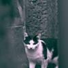 吾輩は猫である、ニャー # 930