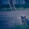 吾輩は猫である、ニャー # 1115