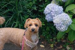 my pretty dog Ⅱ # 332