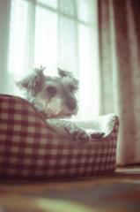 my pretty dog # 81