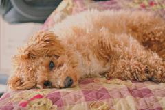 my pretty dog Ⅱ # 241