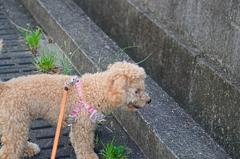 my pretty dog Ⅱ # 100