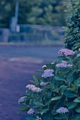花いろいろ