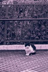 吾輩は猫である、ニャー # 926