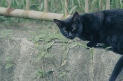 吾輩は猫である、ニャー # 1186
