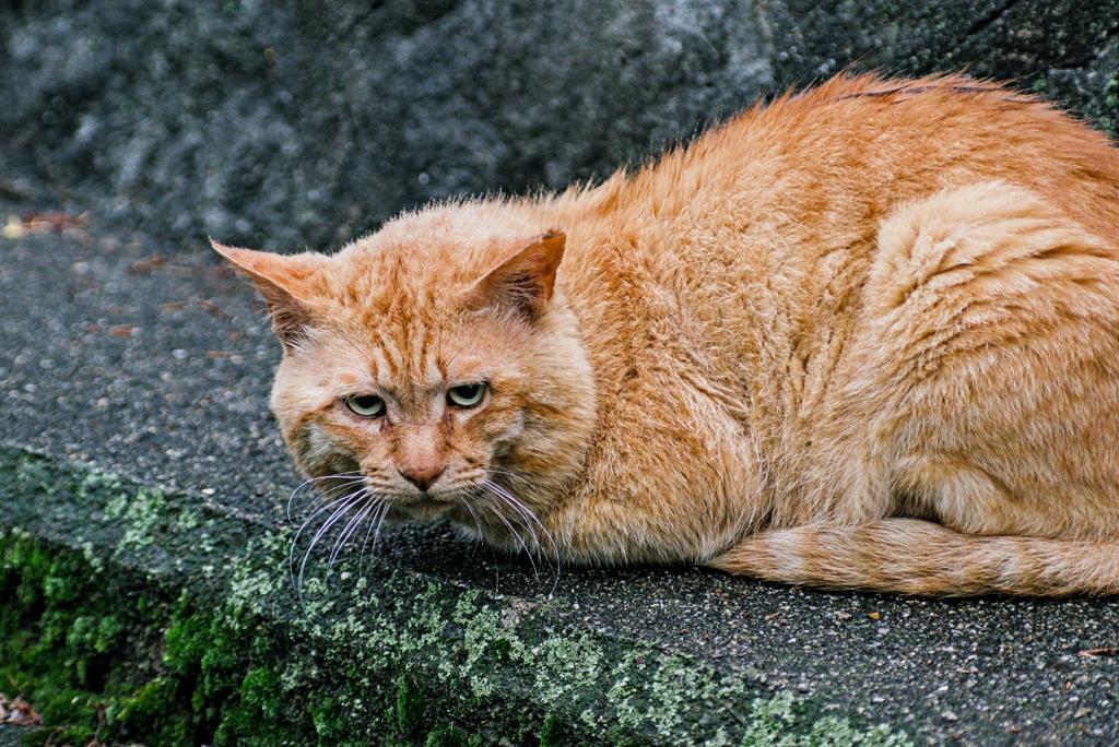 吾輩は猫である、ニャー # 975