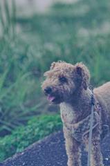my pretty dog Ⅱ # 414
