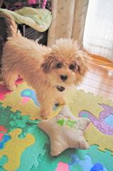 my pretty dog Ⅱ # 24