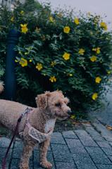 my pretty dog Ⅱ # 329