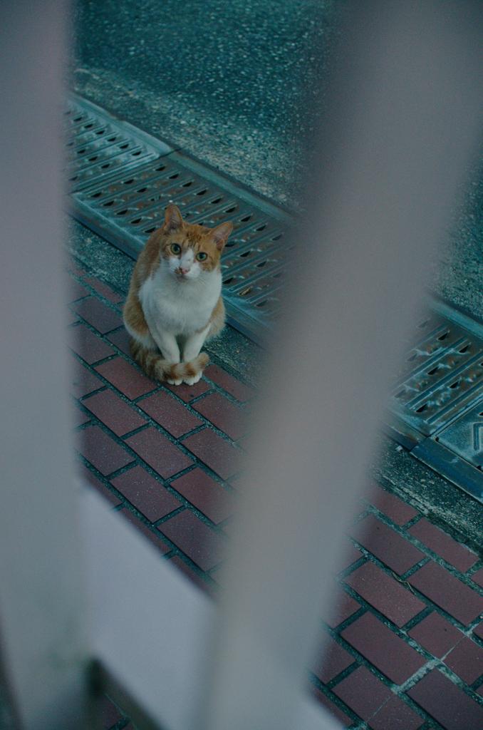 吾輩は猫である、ニャー # 1195