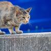 吾輩は猫である、ニャー # 644