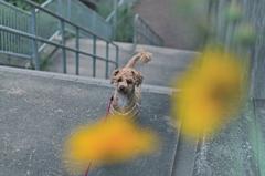 my pretty dog Ⅱ # 341
