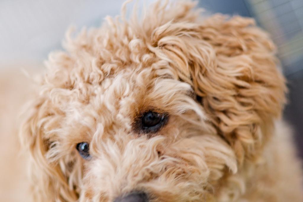 my pretty dog Ⅱ # 230