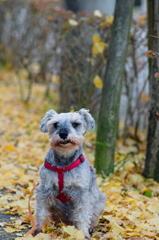 my pretty dog # 313