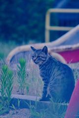 吾輩は猫である、ニャー # 1104