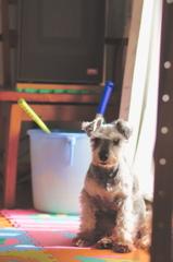 my pretty dog # 320