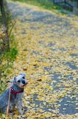 my pretty dog # 314