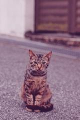 吾輩は猫である、ニャー # 1091