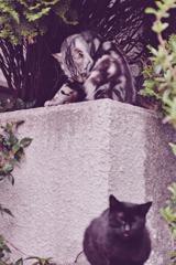 吾輩は猫である、ニャー # 1093
