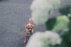 my pretty dog Ⅱ # 335