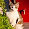 吾輩は猫である、ニャー # 123