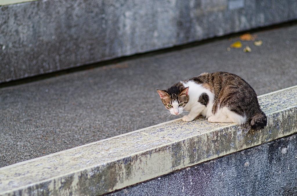 吾輩は猫である、ニャー # 859