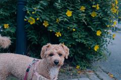 my pretty dog Ⅱ # 330