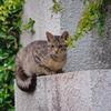 吾輩は猫である、ニャー # 724
