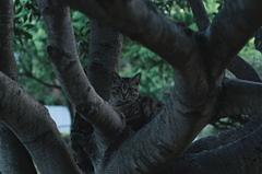 吾輩は猫である、ニャー # 1026