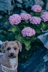 my pretty dog Ⅱ # 337