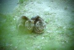 吾輩は猫である、ニャー # 954