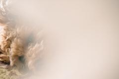 my pretty dog Ⅱ # 243
