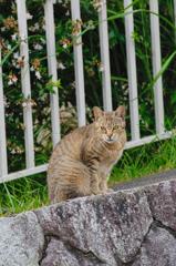 吾輩は猫である、ニャー # 377