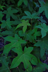 leaf #29