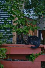 吾輩は猫である、ニャー # 1158