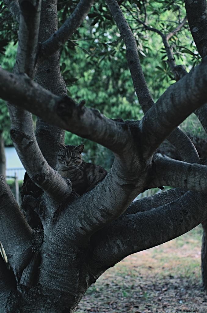 吾輩は猫である、ニャー # 1025