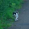 吾輩は猫である、ニャー # 1161
