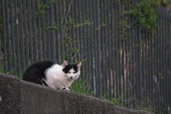 吾輩は猫である、ニャー # 915