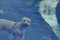 my pretty dog Ⅱ # 415